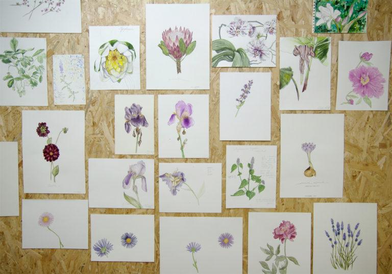 Botanical Drawing Exhibition:Prinzessinnengarten