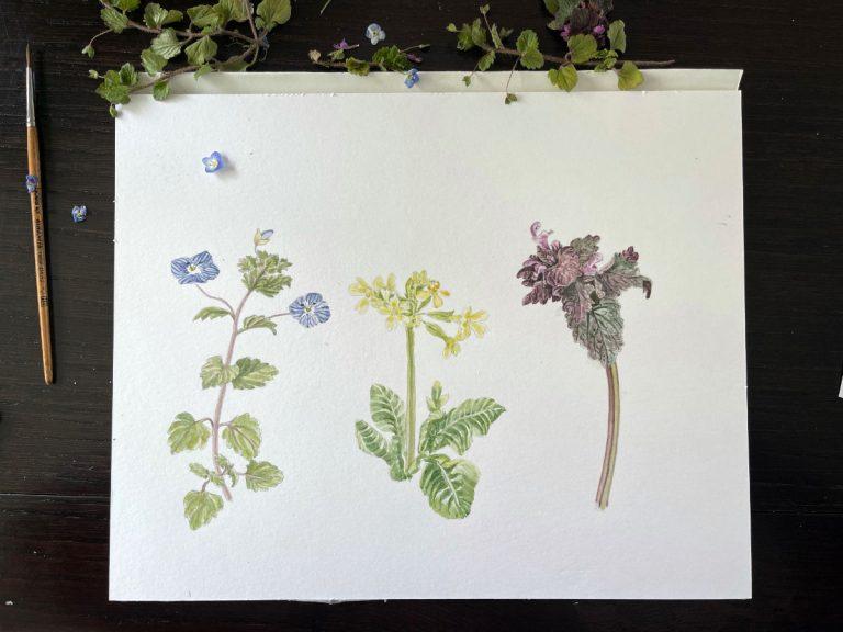 Edible Spring Wildflowers in Watercolor