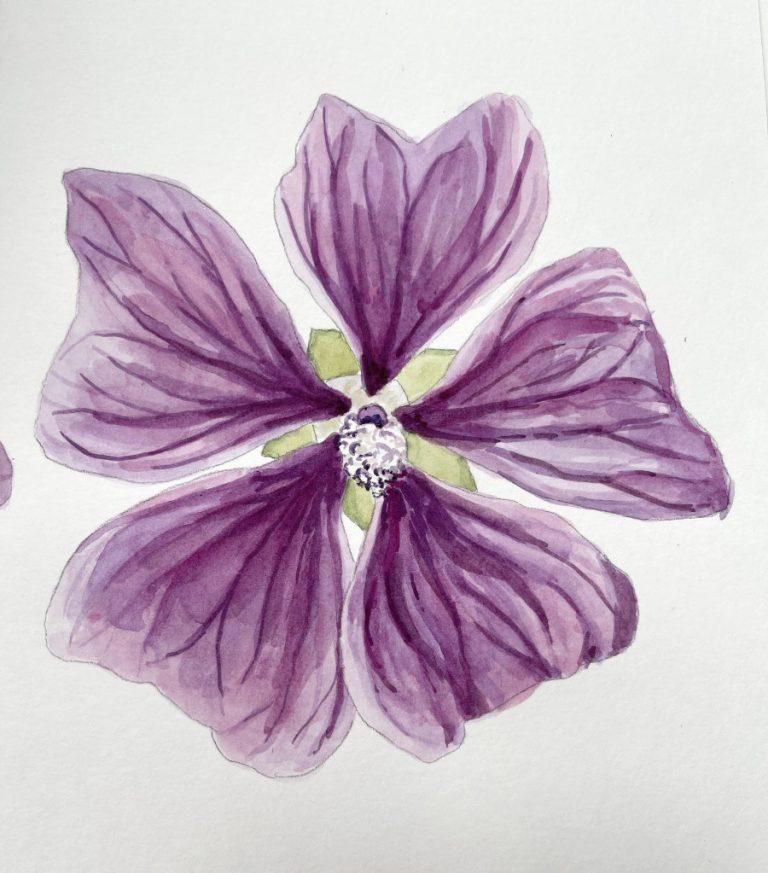Wildflower Painting Free Class